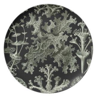 Haeckel Platos