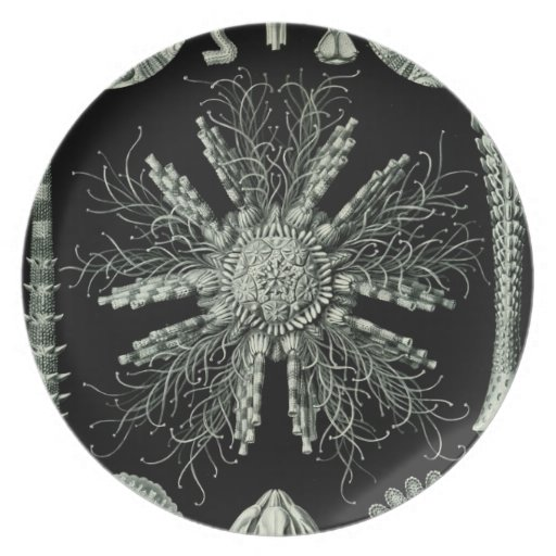 Haeckel Plato De Comida