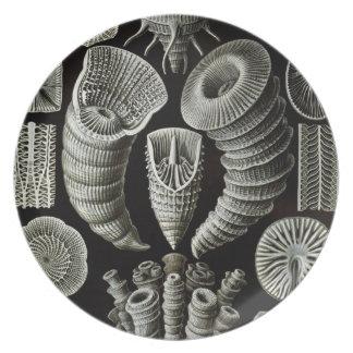 Haeckel Plato Para Fiesta