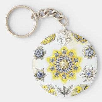 Haeckel Polycyttaria Basic Round Button Keychain