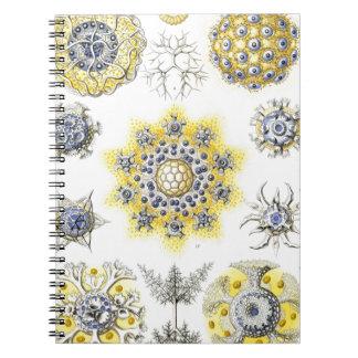 Haeckel Polycyttaria Notebooks