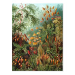 Haeckel Postcard