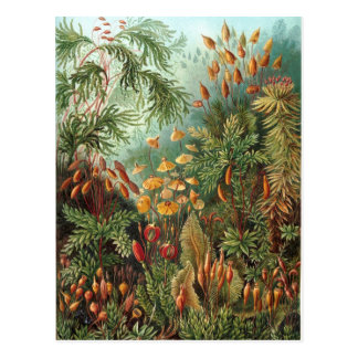 Haeckel Postcard