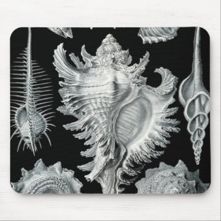 Haeckel Prosobranchia Mouse Pad
