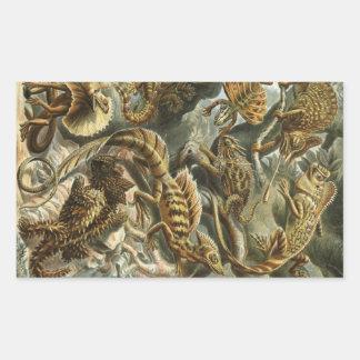 Haeckel Reptiles Rectangular Sticker