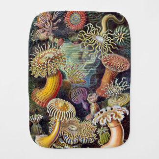 Haeckel Sea Anemone Ocean Life Painting Burp Cloth