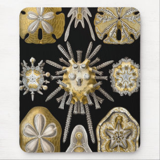 Haeckel Sealife Mouse Pad