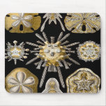 Haeckel Sealife Mouse Pads
