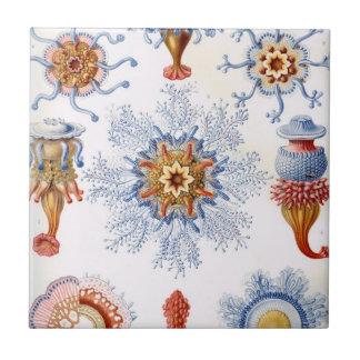 Haeckel Siphonophorae Ceramic Tile