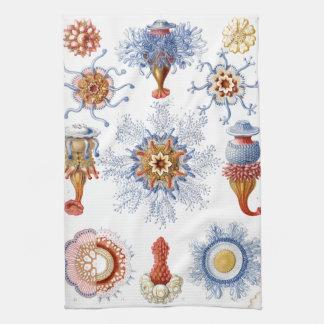 Haeckel Siphonophorae Hand Towels