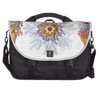 Haeckel Siphonophorae Laptop Messenger Bag