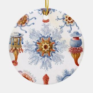 Haeckel Siphonophorae Ornaments