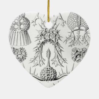 Haeckel Spyroidea Christmas Ornaments