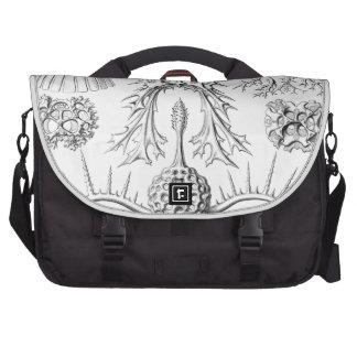 Haeckel Spyroidea Computer Bag