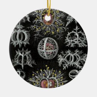 Haeckel Stephoidea Christmas Ornament
