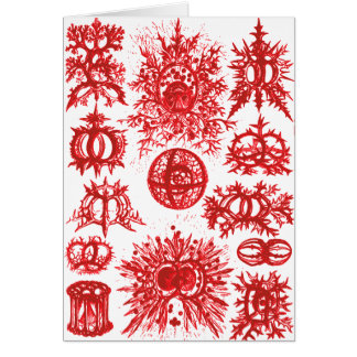 Haeckel Stephoidea Radiolarian Card
