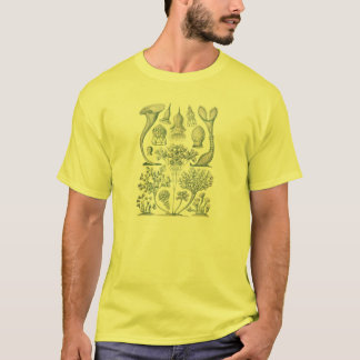 Haeckel T-Shirt