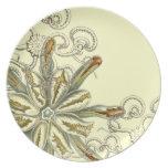 Haeckel - vintage nature party plates