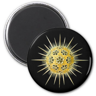 Haeckeliana 2 Inch Round Magnet