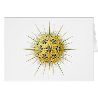 Haeckeliana Card