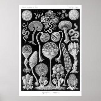 Haeckel's Mycetozoa Posters