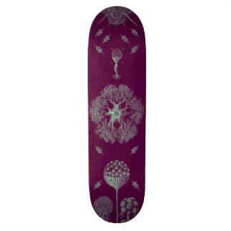 Haeckel's Purple Skateboard