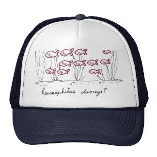 Haemophilus Ducreyi hat