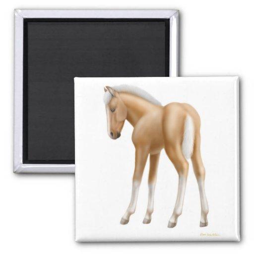 Haflinger Foal Magnet