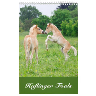 Haflinger Foals 2017 Calendar