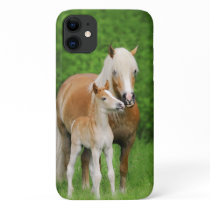 Haflinger Horse Cute Baby Foal Kiss Mum Pony Photo iPhone 11 Case