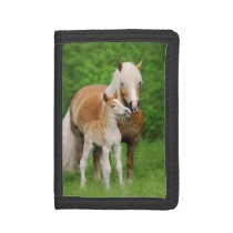 Haflinger Horse Cute Baby Foal Kiss Mum Pony Photo Tri-fold Wallet