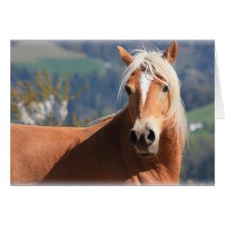 Haflinger Horse Greeting Card
