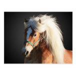 Haflinger Horse with beautiful mane Postcards