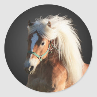 Haflinger Horse with beautiful mane Classic Round Sticker