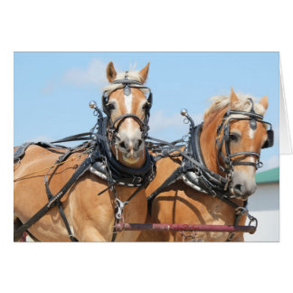 Haflinger Horses Greeting Card
