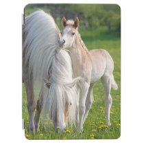 Haflinger Horses Cute Baby Foal With Mum Photo - iPad Air Cover