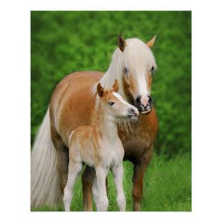 Haflinger Horses Cute Foal Kiss Mum Photography Poster
