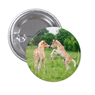 Haflinger horses cute foals rearing 1 inch round button