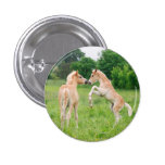 Haflinger horses cute foals rearing button