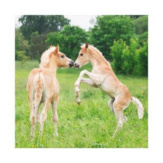 Haflinger horses cute foals rearing canvas print