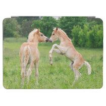 Haflinger horses cute foals rearing iPad air cover