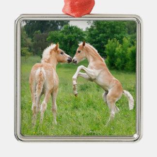 Haflinger horses cute foals rearing metal ornament