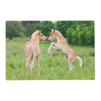 Haflinger horses cute foals rearing placemat