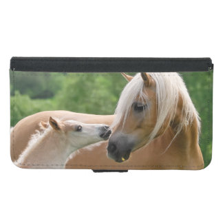 Haflinger mare and foal cuddling