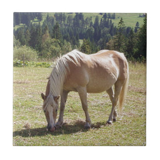 Haflinger Palomino Pony in Green Pasture Photo Tile