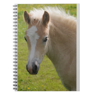 Haflinger Pony (Rare Breed) Notebook