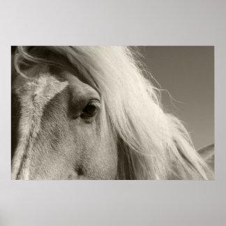 Haflinger portrait - Horse - cheval Poster