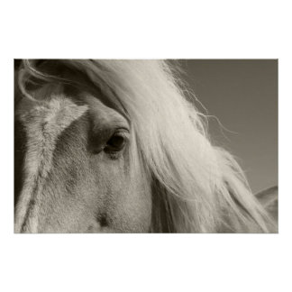 Haflinger retrato cheval - Horse - Posters