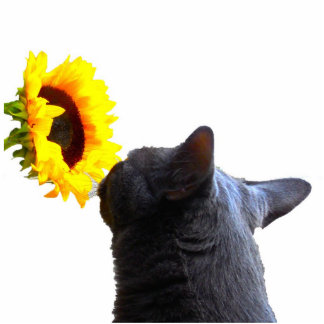 Haga la hora de oler las flores escultura fotográfica