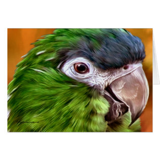 Hahn's Macaw Cards
